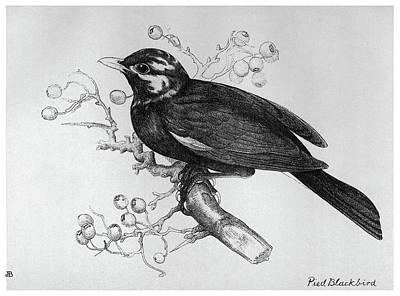 Blackburn Birds, 1895 Poster by Granger