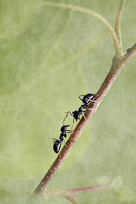 Ant Poster by Heike Hultsch