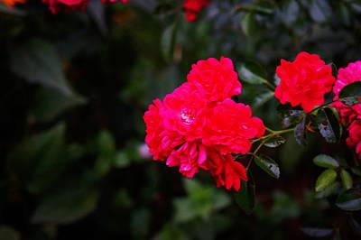 Backyard Flower Poster