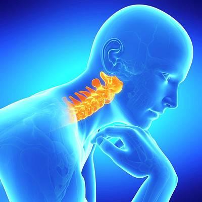 Cervical Spine Poster by Sebastian Kaulitzki