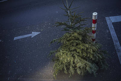 Christmas Tree Unadorned On The Street Poster
