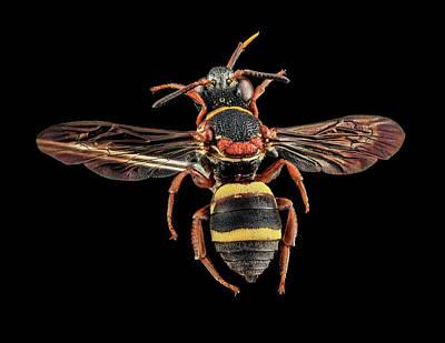 Cuckoo Bee Poster
