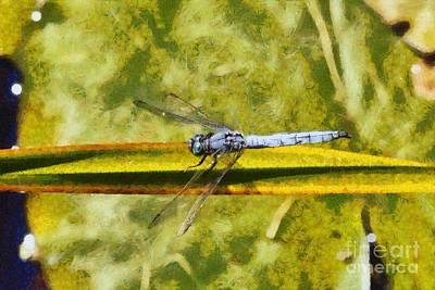 Dragonfly Poster by George Atsametakis