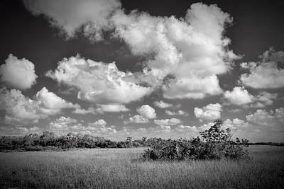 Everglades Landscapebw-5 Poster by Rudy Umans