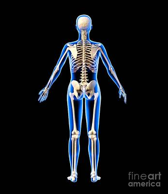 Female Skeleton, Artwork Poster by Roger Harris
