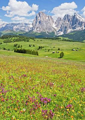 Flowery Alpine Meadow Poster by Bob Gibbons