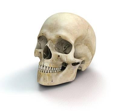 Human Skull Poster by Mikkel Juul Jensen
