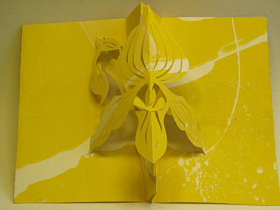 Ladyslipper Orchid  Poster