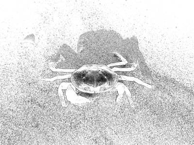 Sunning Sand Crab Poster by Joseph Hendrix