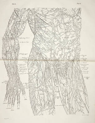 The Circulatory System Poster by British Library
