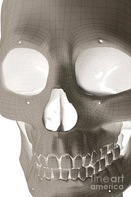 The Skull Poster by Science Picture Co