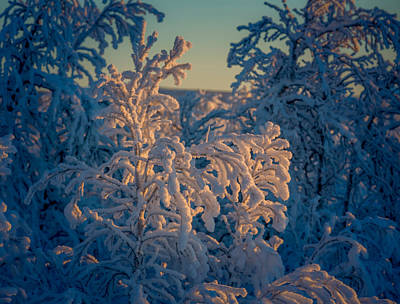 Trees In The Frozen Landscape, Cold Poster