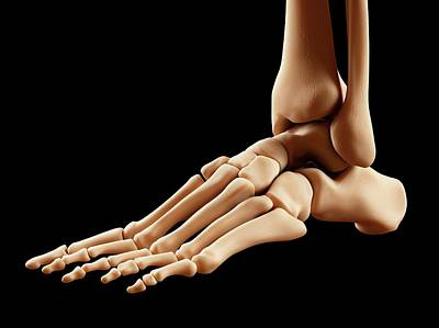 Human Foot Anatomy Poster