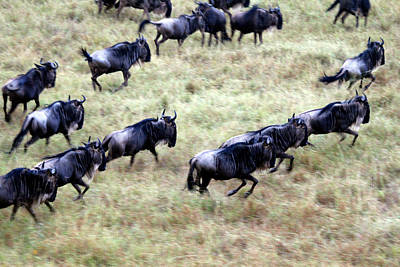 Africa, Kenya, Maasai Mara Poster by Kymri Wilt