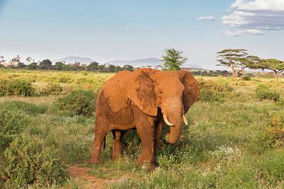 Africa, Kenya, Samburu National Reserve Poster