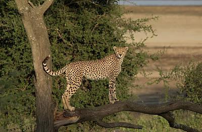 Africa, Tanzania, Serengeti Poster by Charles Sleicher