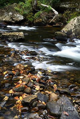 Autumn Along Cranberry River Poster