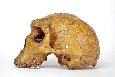 Broken Hill Skull Poster by Natural History Museum, London
