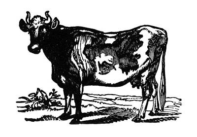 Cow, 19th Century Poster by Granger