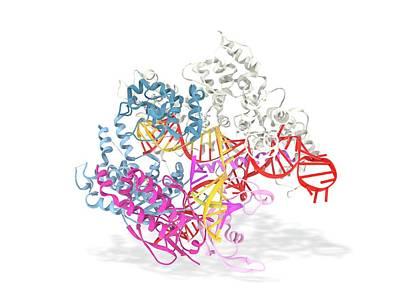 Crispr-cas9 Gene Editing Complex Poster by Ramon Andrade 3dciencia