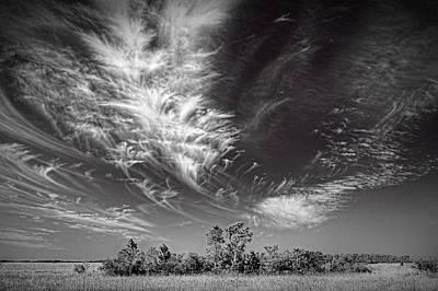 Everglades Landscape Poster by Rudy Umans