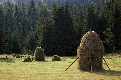 Hay Harvest And Haystack In The Apuseni Poster