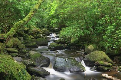 Killarney National Park, County Kerry Poster
