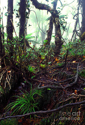 Misty Rainforest El Yunque Poster by Thomas R Fletcher