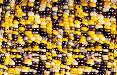 Slit-scan Image Of Flint Corn Poster