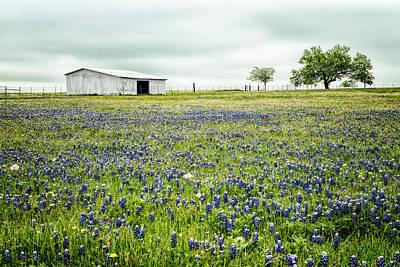 Texas Bluebonnets 6 Poster