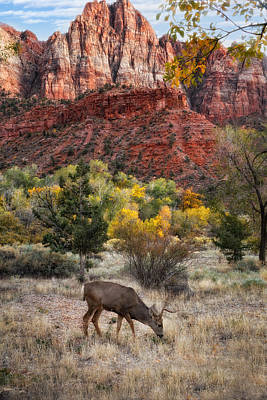 Zion National Park Poster by Utah Images