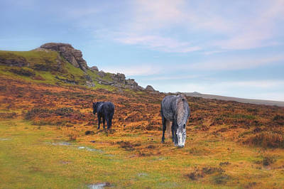 Dartmoor Poster by Joana Kruse