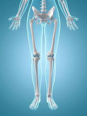 Human Leg Bones Poster by Sebastian Kaulitzki