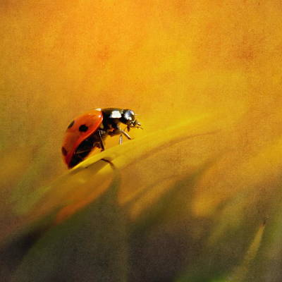 Ladybug Poster by Heike Hultsch