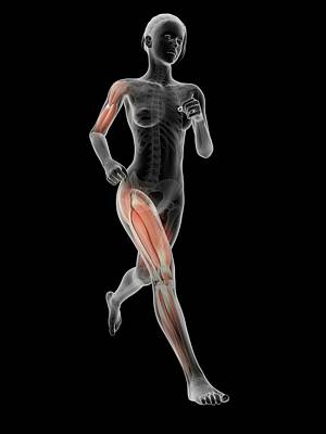 Muscular System Of A Runner Poster