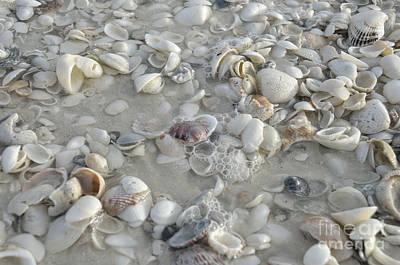 Sea Shells On Marco Island Poster