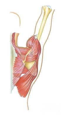 Shoulder Joint Movement, Artwork Poster by Bo Veisland