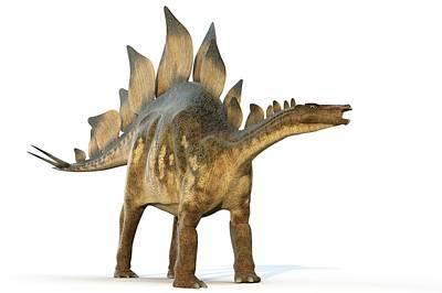 Stegosaur Dinosaur Poster by Roger Harris