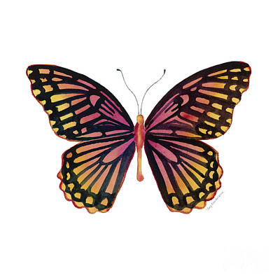 70 Sunrise Mime Butterfly Poster by Amy Kirkpatrick