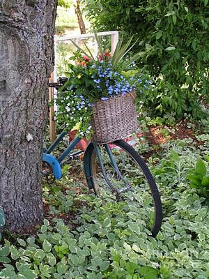 #755 D45 Bike And A Basket Of Flowers Poster by Robin Lee Mccarthy Photography