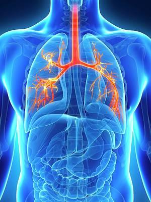 Human Lungs Poster by Sebastian Kaulitzki