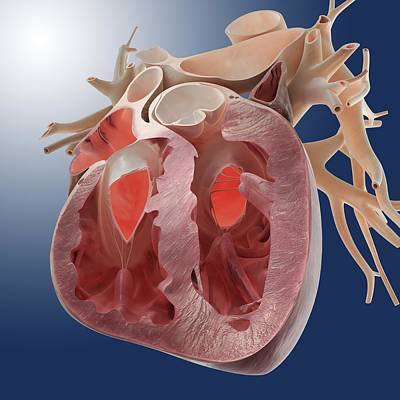 Heart, Artwork Poster by Science Photo Library