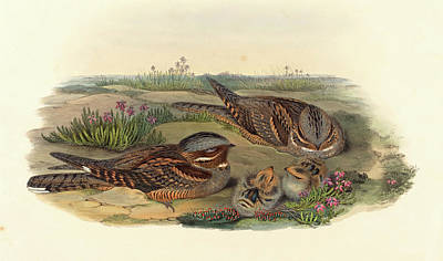 John Gould And H.c Poster by Litz Collection