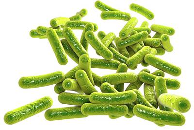 Rod-shaped Bacteria Poster