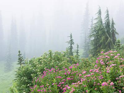 Washington, Mount Rainier National Park Poster