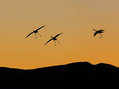 Usa, New Mexico, Bosque Del Apache Poster by Jaynes Gallery