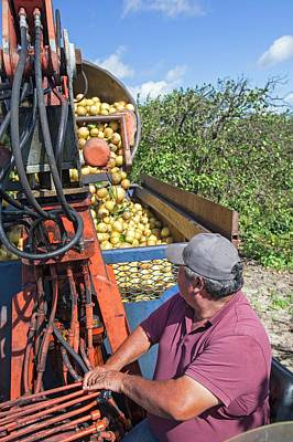 Grapefruit Farming Poster