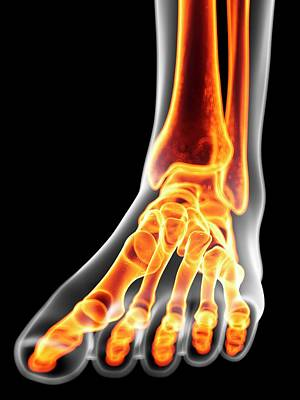 Human Foot Bones Poster by Sciepro