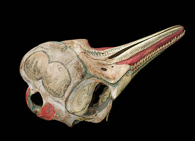 Ink Scrimshaw On Dolphin Skull Poster