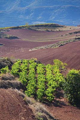 Spain, La Rioja Region, La Rioja Poster